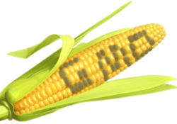 gmo-corn-bought
