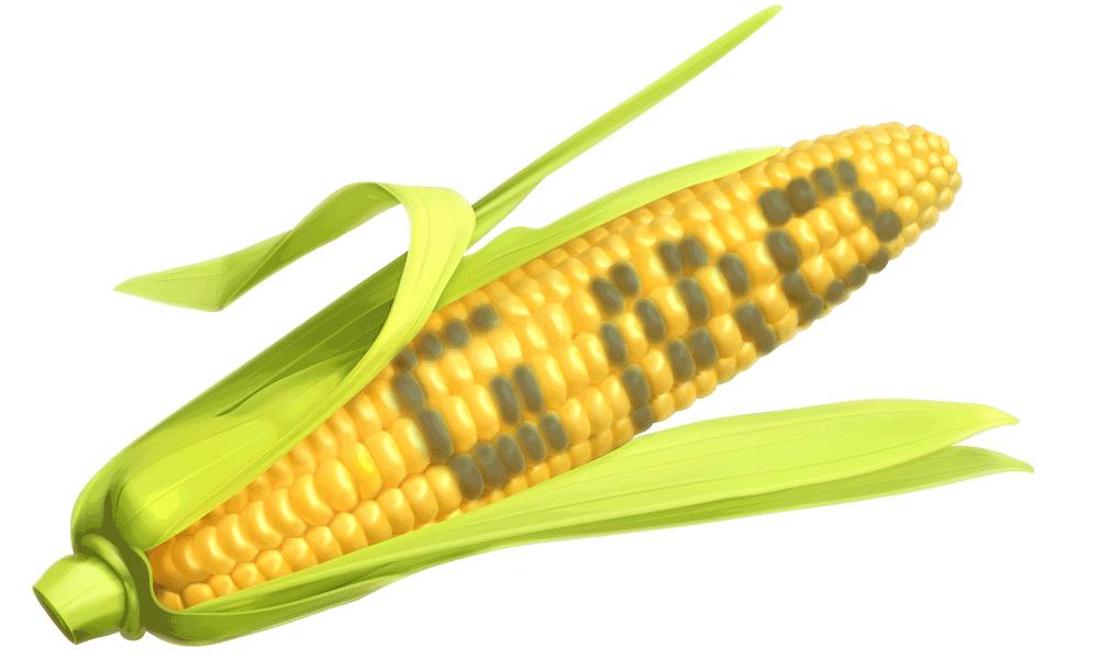gmo-corn-bought